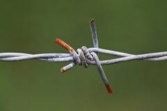 Filo del collegare del ferro su priorità bassa verde Fotografie Stock