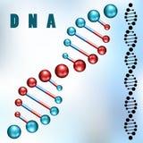 Filo del DNA Immagini Stock