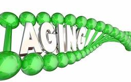 Filo del DNA di invecchiamento illustrazione vettoriale