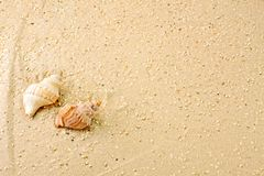 Sabbia di Meeresschnecken im Immagini Stock Libere da Diritti