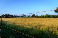 Filo spinato lungo un campo dorato Immagini Stock