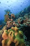 Filones coralinos imagenes de archivo