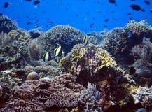 Filones coralinos foto de archivo libre de regalías