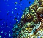 Filones coralinos imagen de archivo