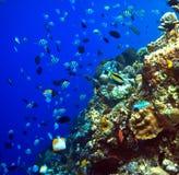 Filones coralinos Fotos de archivo