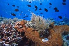 Filones coralinos imagen de archivo libre de regalías