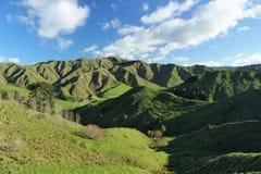 Filos de colinas verdes en campo del ½ s del ¿del zealandï Imágenes de archivo libres de regalías