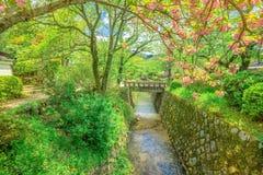 Filosof` s går Sakura royaltyfri fotografi