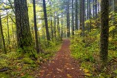 Fils de sortie de chemin par une forêt d'automne Photos libres de droits