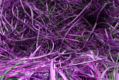 Fils violets Photos libres de droits