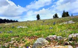 Filt av vildblommor Royaltyfri Fotografi