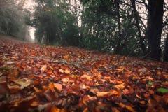 Filt Ujaperos för sidor för höstlandskapbrunt arkivbilder