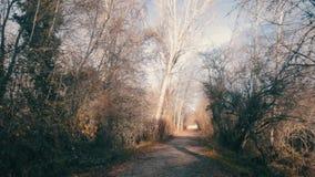 Filter neer aan verbazende sleep door midden van lange bomen stock video