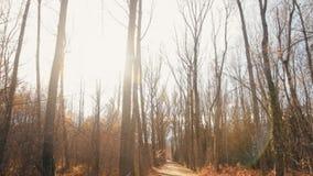 Filter neer aan verbazende sleep door midden van lange bomen stock footage