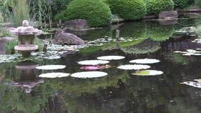 Filter net over waterlily vijver in formele Japanse stijltuin stock videobeelden