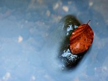Filtered photo.Gravel at mountain river covered with fall leaves Stock Images