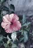 Filtered Pink Beautiful Flower stock photography