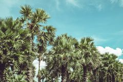 Filtered Single Palm Tree. Retro Filtered Single Palm Tree Royalty Free Stock Images