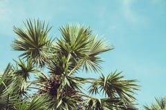 Filtered Single Palm Tree. Retro Filtered Single Palm Tree Royalty Free Stock Image