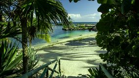 Filtered view from palm trees and vegetation of the Puerto Aventuras beach in the Mayan Riviera in Mexico