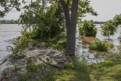 Filth and trash and debris from flooded river caught up and held in place and floating on water near shore - selective focus.  stock image