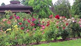 Filtração até uma estrutura da máscara no centro do jardim de rosas filme