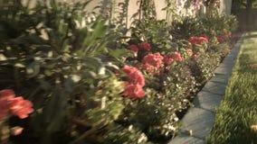 Filtração Handheld do tiro por flores em uma jarda bonita video estoque