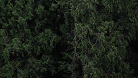 Filtrado abajo a través de bosque a la cerca de madera almacen de video