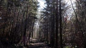 Filtrado arriba y abajo de un bosque metrajes