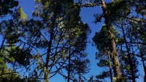 Filtrado hasta los pinos almacen de metraje de vídeo