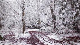 Filtrage juste vers la gauche au-dessus de la forêt neigeuse clips vidéos