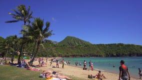 Filtrando o tiro da praia em Havaí video estoque