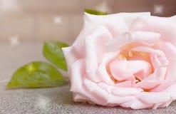 Filtre abstrait de fond et de couleur de rose de rose Image stock