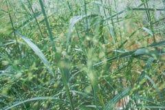 filtre de vintage Instruction-macro d'herbe verte photos stock