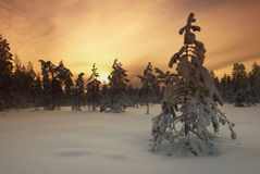 Filtred Tree In Wintery Landscape Royalty Free Stock Images
