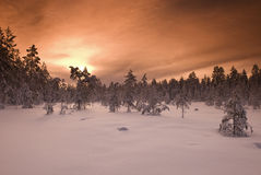 Filtred Wintery Landscape Royalty Free Stock Photos