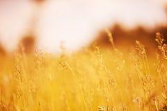Naturlig bakgrund för Defocus blur Royaltyfri Foto