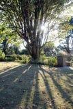 Filtrerat solljus till och med träd Arkivbilder