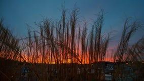 filtro do nascer do sol Imagens de Stock