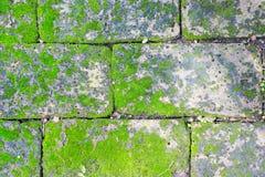 Filtro do vintage: bloco de pedra do tijolo do grunge com musgo da grama na ressaca foto de stock royalty free