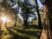 Filtrujący światło słoneczne przez lasu przy rzeką obraz stock