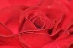 Filz Rose Stockbilder