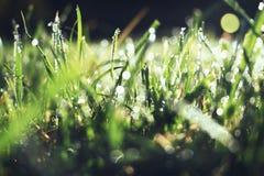 Fim abstrato da grama acima com gotas da água imagem de stock royalty free