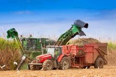 Fim-acima da colheita do cana-de-açúcar Imagem de Stock