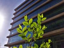 Fim acima da parte dianteira pequena da árvore do prédio de escritórios fotografia de stock royalty free