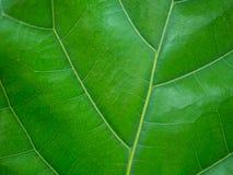 Fim acima da textura verde do fundo natural da folha fotos de stock