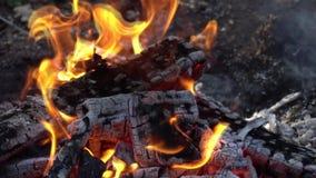 Fim acima das chamas da fogueira do fogo de acampamento, lenha de queimadura super do movimento lento vídeos de arquivo
