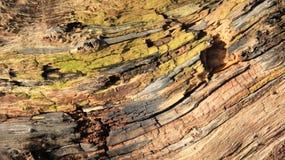 Fim acima das madeiras velhas das texturas de Cracken fotos de stock