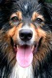 Fim acima de um cão de sorriso fotos de stock