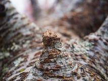 Fim-acima de um tronco de árvore Fotografia de Stock